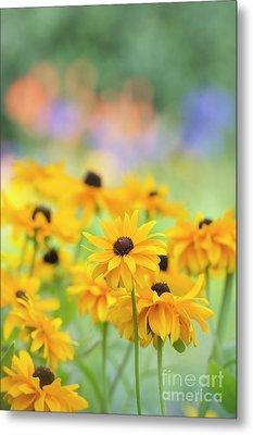 Rudbeckia Indian Summer Flowers Metal Print by Tim Gainey