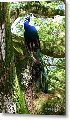 Ruler Of The Roost Metal Print by Mary Deal