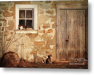 Rural Barn With Cats Laying In The Sun  Metal Print by Sandra Cunningham