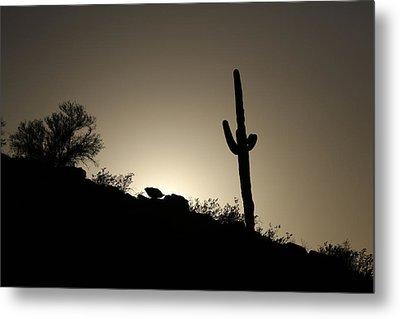 Saguaro Sunset Metal Print by David Yunker