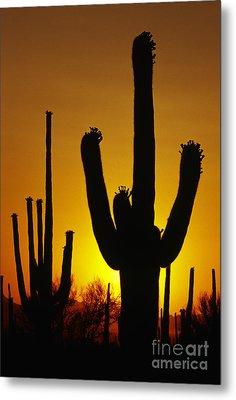 Saguaro Sunset Metal Print by Sandra Bronstein