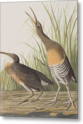 Salt Water Marsh Hen Metal Print by John James Audubon