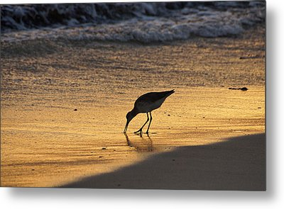 Sandpiper In Evening Metal Print by Sandy Keeton