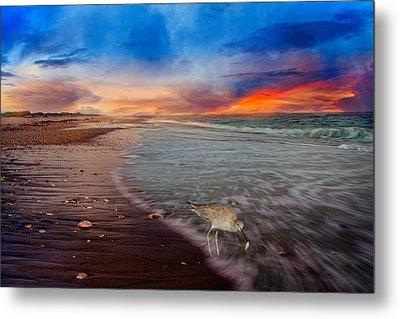 Sandpiper Sunrise Metal Print by Betsy C Knapp