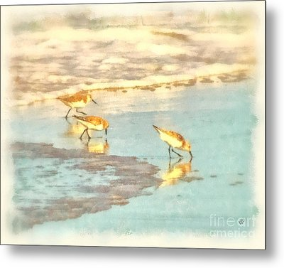 Sandpipers Along The Shoreline Metal Print by Betsy Foster Breen