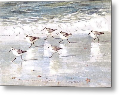 Sandpipers On Siesta Key Metal Print by Shawn McLoughlin