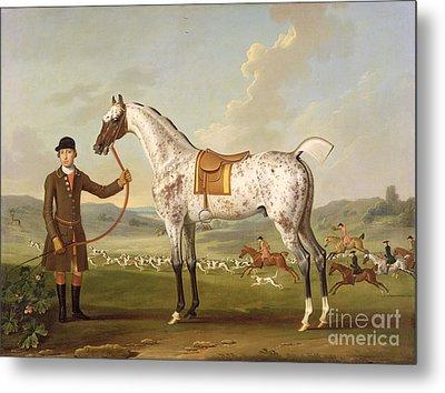 Scipio - Colonel Roche's Spotted Hunter Metal Print by Thomas Spencer