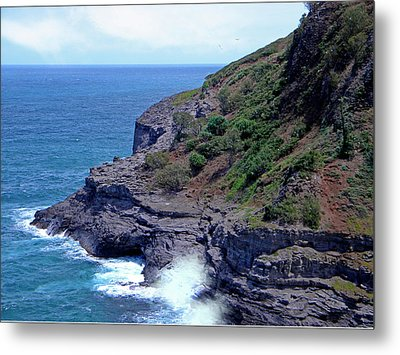 Sea Cave And Nesting Boobies Metal Print by Frank Wilson