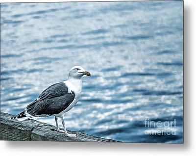 Sea Gull II Metal Print by Tamyra Ayles