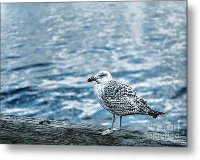 Sea Gull Metal Print by Tamyra Ayles