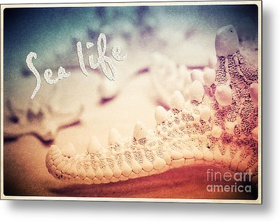 Sea Life Metal Print by Angela Doelling AD DESIGN Photo and PhotoArt