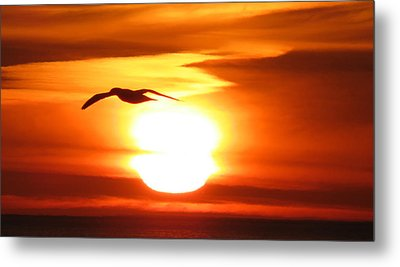 Seagull In The Sunrise Metal Print by Michel DesRoches