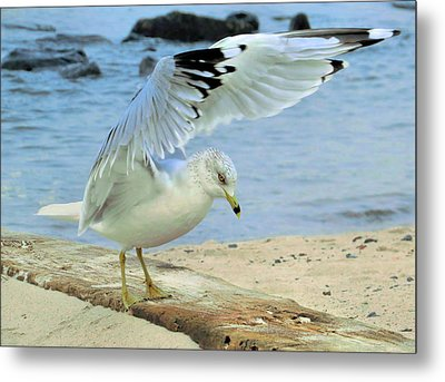 Seagull On The Beach Metal Print by Nina Bradica