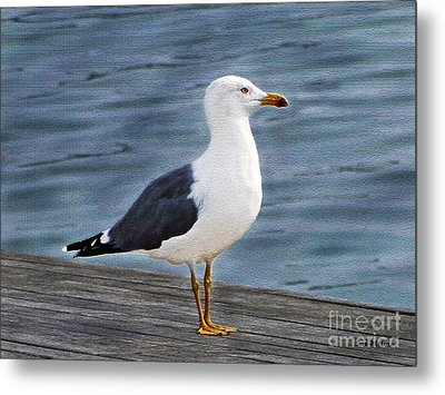 Seagull Portrait Metal Print by Sue Melvin