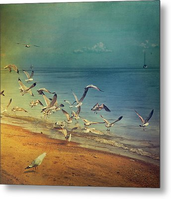 Seagulls Flying Metal Print by Istvan Kadar Photography