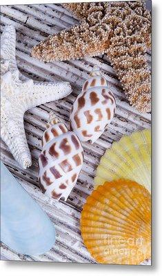 Seashells And Starfish Metal Print by Bill Brennan - Printscapes