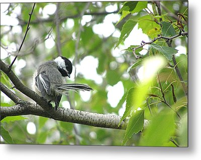 Second Glance Metal Print by Angie Rea