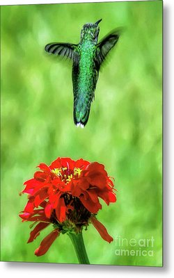 See Ya Later Metal Print by Sue Melvin