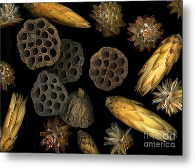 Seeds And Pods Metal Print by Christian Slanec