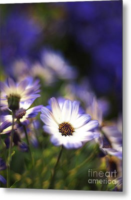 Senetti Dreams Metal Print by Dorothy Lee