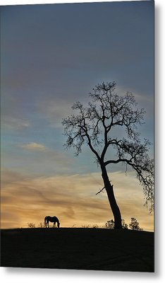 Sernity Morning Metal Print by Stephanie Laird