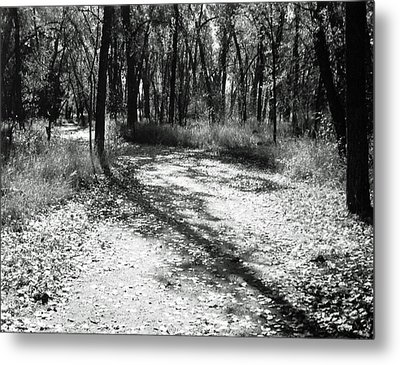 Shadow Path Metal Print by Allan McConnell
