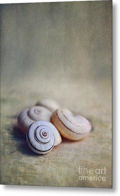 Shell Still Life Metal Print by Lyn Randle