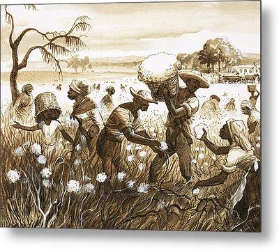 Slaves Picking Cotton Metal Print by English School