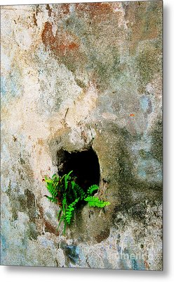 Small Ferns Metal Print by Perry Webster