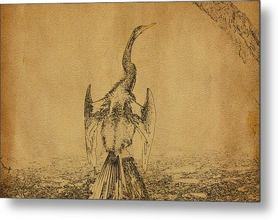 Snake Bird Or Darter  Metal Print by Manjot Singh Sachdeva