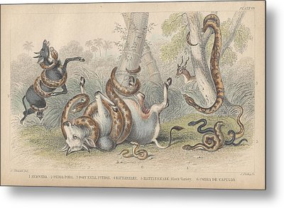 Snakes Metal Print by Oliver Goldsmith