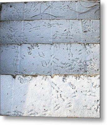 Snow Bird Tracks Metal Print by Karen Adams