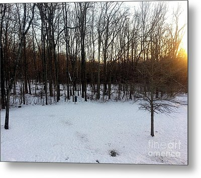 Snow In The Woods Metal Print by Josephine W