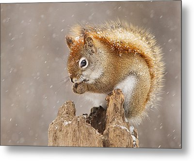 Snow Storm Metal Print by Mircea Costina