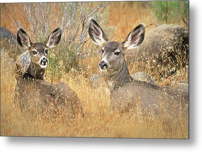 So Much For Your Secret Place... Metal Print by Donna Kennedy