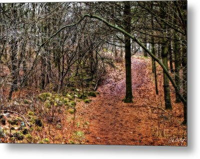 Soft Light In The Woods Metal Print by Phill Doherty