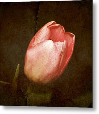 Soft Pink Tulip Metal Print by Cathie Tyler
