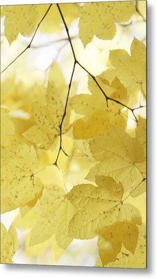 Softness Of Yellow Leaves Metal Print by Jennie Marie Schell