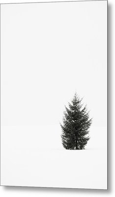 Solitary Evergreen Tree Metal Print by Jennifer Squires