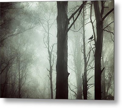 Solitude Metal Print by Amy Weiss
