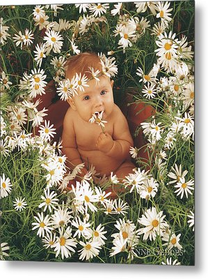 Sophie In Daisy Pot Metal Print by Anne Geddes