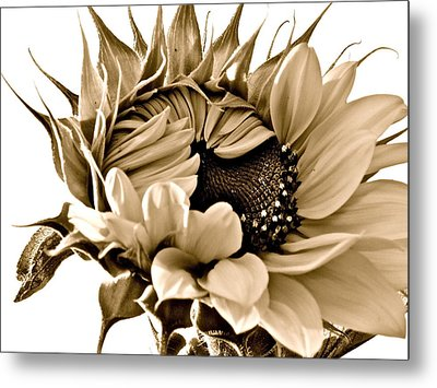 Sophisticated Metal Print by Gwyn Newcombe