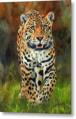 South American Jaguar Metal Print by David Stribbling