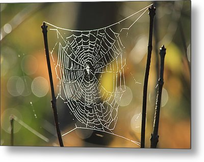 Spider's Creation Metal Print by Karol Livote