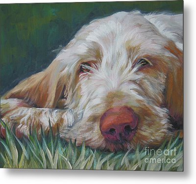 Spinone Italiano Orange Metal Print by Lee Ann Shepard