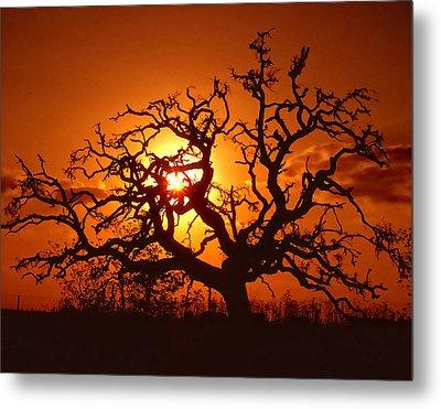 Spooky Tree Metal Print by Stephen Anderson