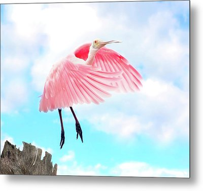 Spoonbill Launch Metal Print by Mark Andrew Thomas