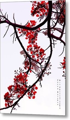 Spring Bloosom In Maldives. Flamboyant Tree Metal Print by Jenny Rainbow