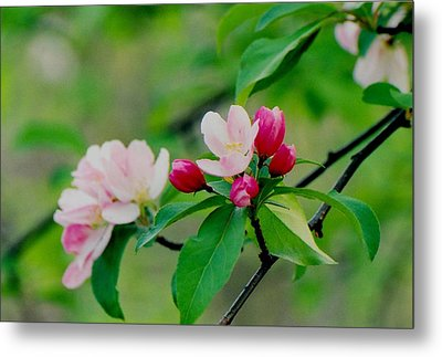 Spring Blossom Metal Print by Juergen Roth