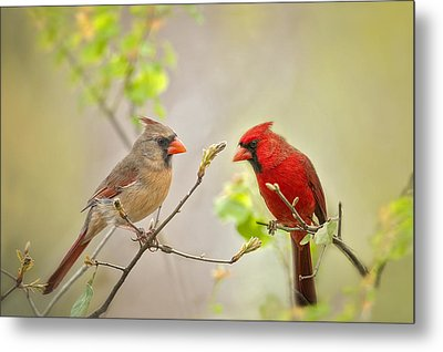 Spring Cardinals Metal Print by Bonnie Barry
